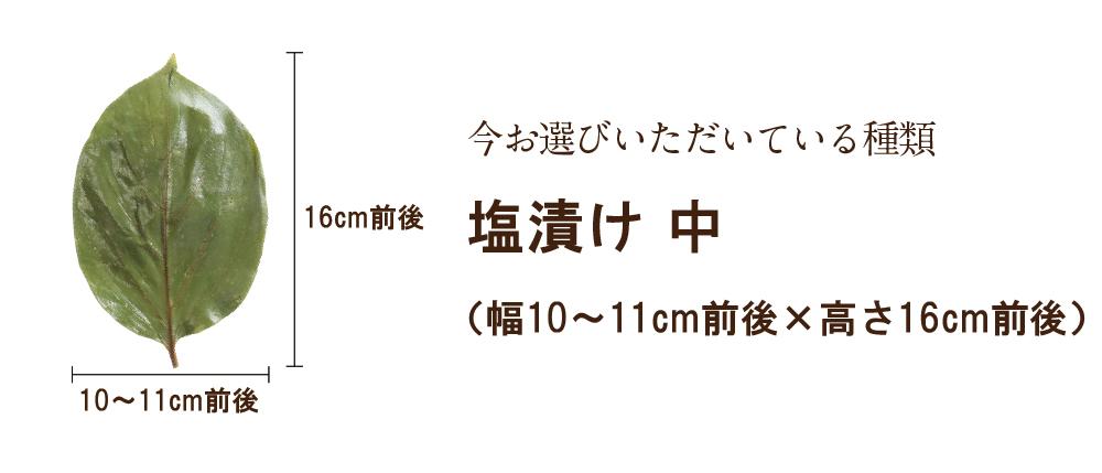 柿の葉(中)