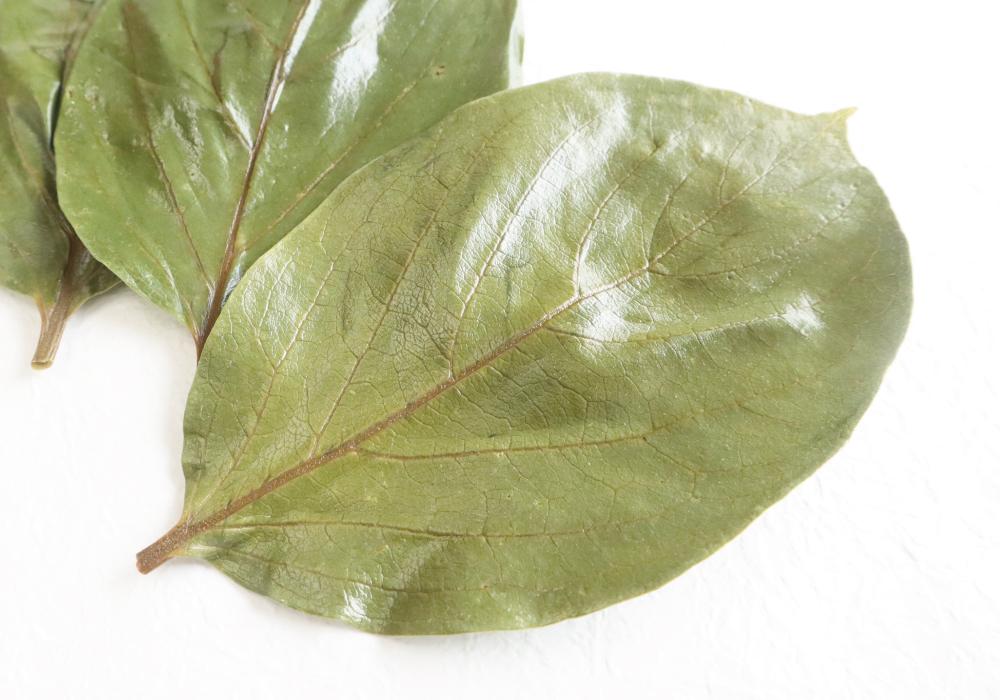 柿の葉塩漬け(M) イメージ