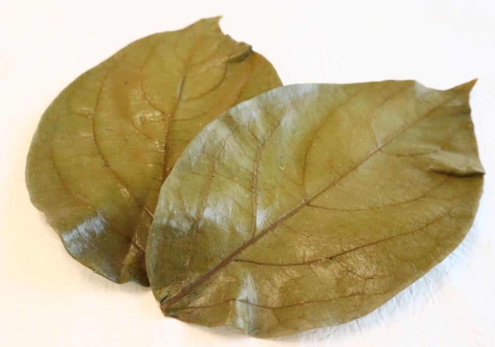 国産柿の葉 イメージ