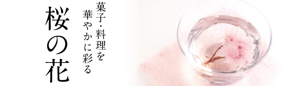 桜の花 TOPバナー