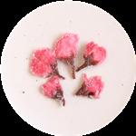 桜の花(一輪) 表